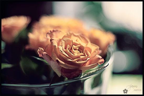 rose1s.jpg