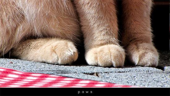 wo21_paws_s.jpg