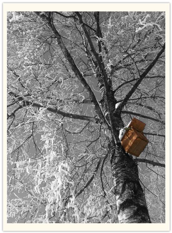 winterbaum_s.jpg