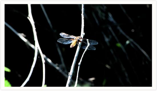 dragonfly2_s.jpg