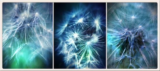 dandelion2_s.jpg