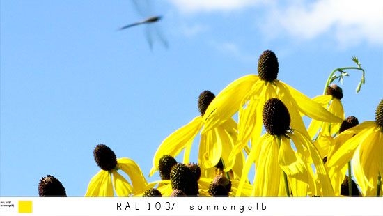 1037_s.jpg