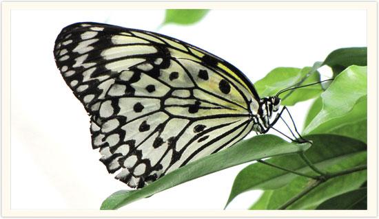 butterfly_s.jpg